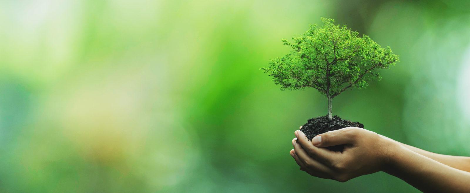Plante i hånden